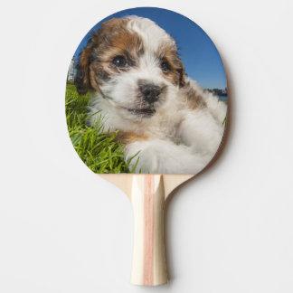 Niedlicher Welpenhund (Shitzu) Tischtennis Schläger