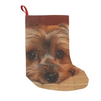 Niedlicher Yorkshire-Terrier-Welpe Kleiner Weihnachtsstrumpf