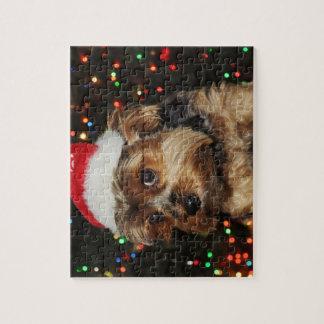 Niedlicher Yorkshire-Terrierhund mit Puzzle