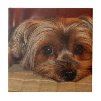 Niedlicher Yorkshire-Terrierhund, yorkie Fliese