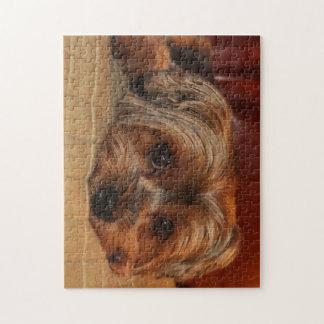 Niedlicher Yorkshire-Terrierhund, yorkie Puzzle