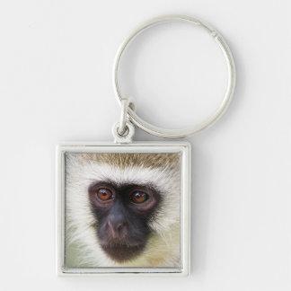 Niedliches Affeporträt Silberfarbener Quadratischer Schlüsselanhänger