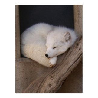 Niedliches arktischer Fox-Schlafen Postkarte