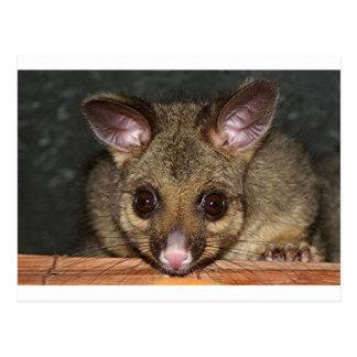 Niedliches australisches Opossum Postkarte
