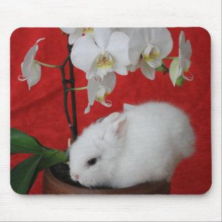 Niedliches Baby-Häschen durch eine weiße Orchidee Mousepad