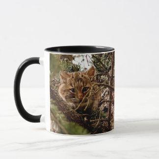 Niedliches Bobcat-Kätzchen in einem Baum Tasse