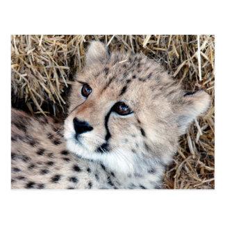 Niedliches Cheetah-CUB-Foto Postkarte