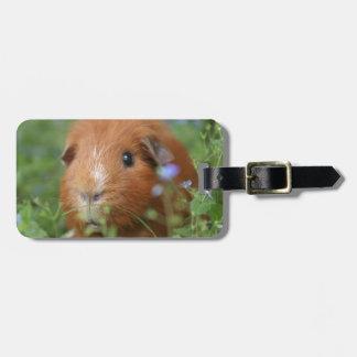 Niedliches cuddly Ingwermeerschweinchen draußen Gepäckanhänger