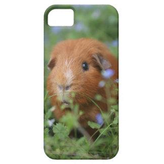 Niedliches cuddly Ingwermeerschweinchen draußen Schutzhülle Fürs iPhone 5