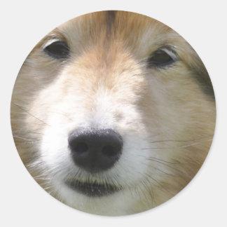 Niedliches die Shetlandinseln-Schäferhundporträt Runder Aufkleber