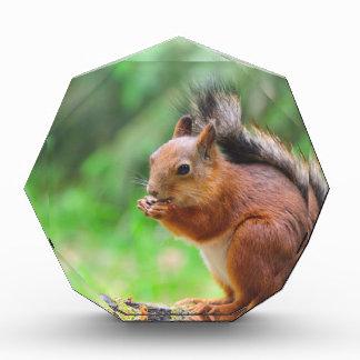 Niedliches Eichhörnchen Acryl Auszeichnung