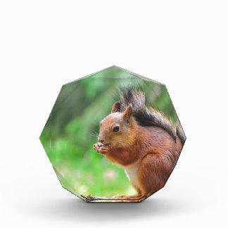 Niedliches Eichhörnchen Auszeichnung