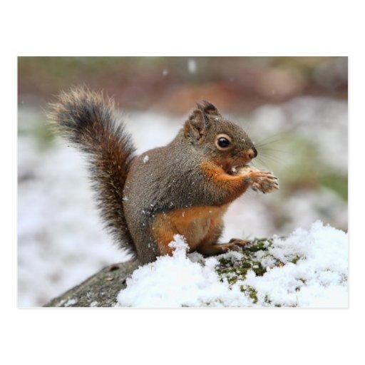 Niedliches Eichhörnchen im Schnee-Foto Postkarten