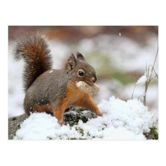 Niedliches Eichhörnchen im Schnee mit Erdnuss Postkarte