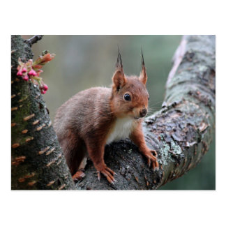 Niedliches Eichhörnchen in einem Baum Postkarte