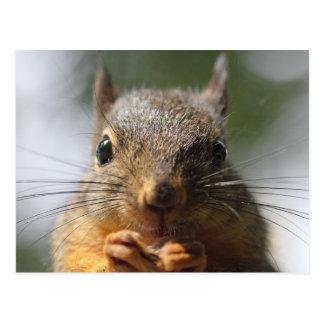 Niedliches Eichhörnchen-lächelndes Makrofoto