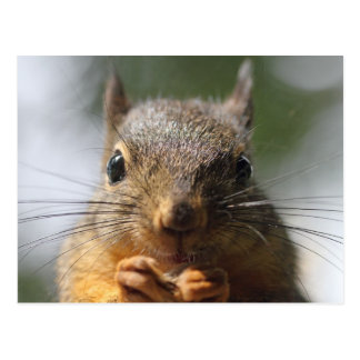 Niedliches Eichhörnchen-lächelndes MakroFoto Postkarten