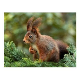 Niedliches Eichhörnchen Postkarte