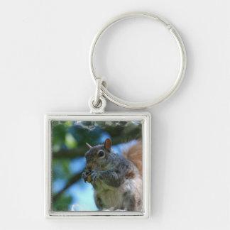 Niedliches Eichhörnchen Schlüsselanhänger