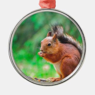 Niedliches Eichhörnchen Silbernes Ornament