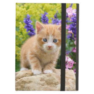 Niedliches flaumiges Ingwer-Katzen-Kätzchen im