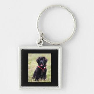 Niedliches Foto des Neufundland-Hundewelpen, Silberfarbener Quadratischer Schlüsselanhänger