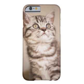 Niedliches graues britisches kurzes Haar-Kätzchen Barely There iPhone 6 Hülle