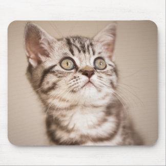 Niedliches graues britisches kurzes Haar-Kätzchen Mousepad