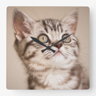 Niedliches graues britisches kurzes Haar-Kätzchen Quadratische Wanduhr