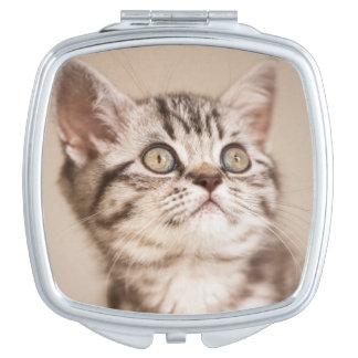 Niedliches graues britisches kurzes Haar-Kätzchen Taschenspiegel