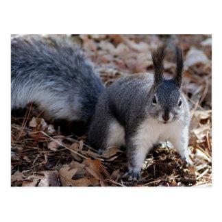 Niedliches graues Eichhörnchen im Herbst Postkarte