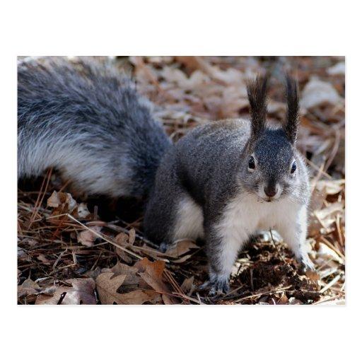 Niedliches graues Eichhörnchen im Herbst Postkarten