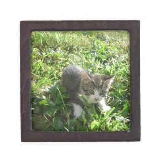 Niedliches graues Kätzchen Schachtel