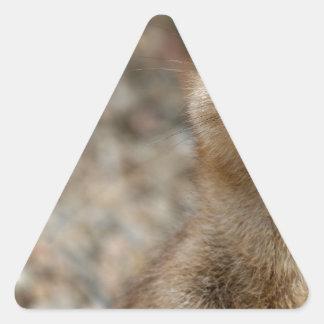 Niedliches Groß-Mit Augen Meerkat Dreieckiger Aufkleber