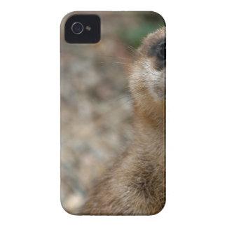 Niedliches Groß-Mit Augen Meerkat iPhone 4 Case-Mate Hülle