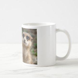Niedliches Groß-Mit Augen Meerkat Kaffeetasse