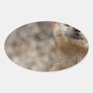 Niedliches Groß-Mit Augen Meerkat Ovaler Aufkleber