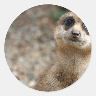 Niedliches Groß-Mit Augen Meerkat Runder Aufkleber