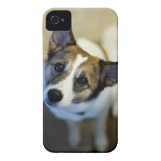 Niedliches HundeBlackBerry-mutiger Kasten iPhone 4 Case-Mate Hüllen