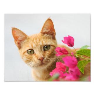 Niedliches Ingwer-Katzen-Kätzchen-Aufpassen - Fotodruck