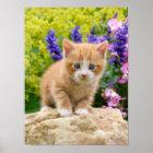 Niedliches Ingwer-Katzen-Kätzchen im blumigen Poster