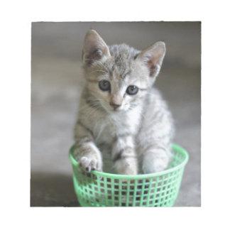 Niedliches Kätzchen, das in einem grünen Korb Notizblock
