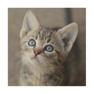 Niedliches Kätzchen im Garten Holzdruck