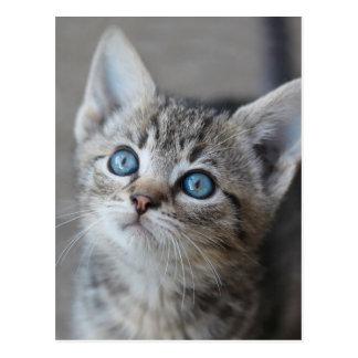 Niedliches Kätzchen im Garten Postkarte