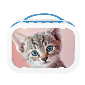 Niedliches Kätzchen mit blauen Augen Brotdose