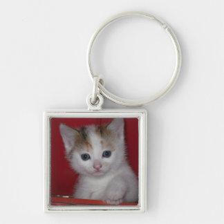 Niedliches Kätzchen Schlüsselanhänger