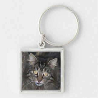 Niedliches Kätzchen Silberfarbener Quadratischer Schlüsselanhänger