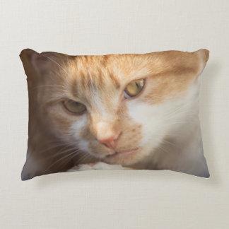 Niedliches Katzen-Gesicht auf a Dekokissen
