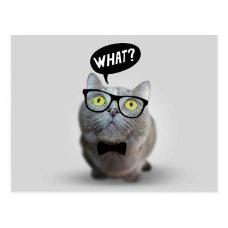 Niedliches Katzenkätzchen mit Gläsern welcher Postkarten