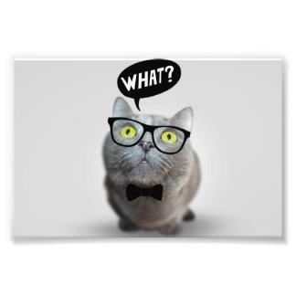 Niedliches Katzenkätzchen mit Gläsern welches Photo Drucke